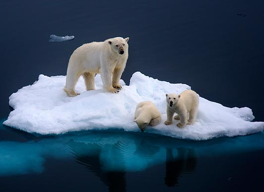 Image result for polar bears global warming